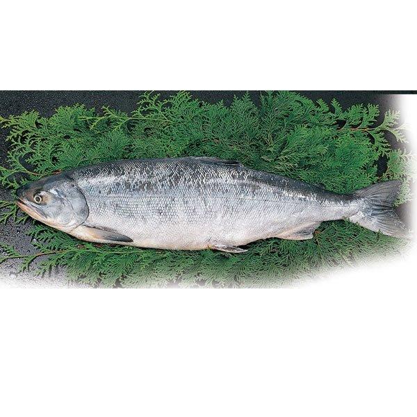 画像1: 紅鮭(甘口) B) 1本(2.4Kg〜2.7Kg位) (1)